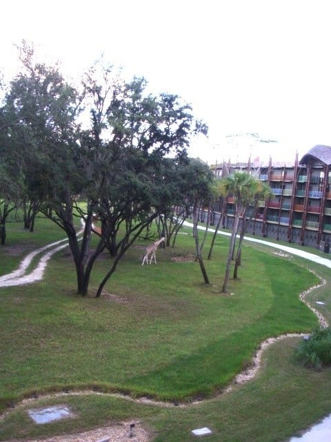 Animal Kingdom Lodge savannah view room