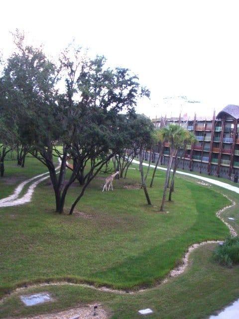 Animal Kingdom Lodge savannah view room